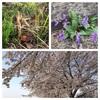 春ランまんルン♪