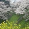 もうじき、大好きな桜の季節が・・・。