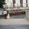 【新コロ】 神田川を歩く ~コロナ在宅で、早朝は神田川を散歩しています。