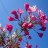 「コシアブラ」も葉が展開…、「夏日」。