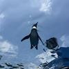 【スマホで動物を可愛く撮りたい人必見】上手に撮るコツ、教えます。in水族館