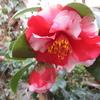 「まつこの庭」・春の花木