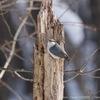 【野鳥の写真】札幌、平岡公園で野鳥撮影