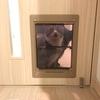 猫用にペットドアの取り付け工事をしてもらった話