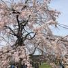 【春休み】京都水族館&すざくゆめ広場に行きました