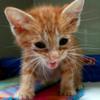 【低血糖】子猫や老猫は、至急の対処が必要ですよ ~最近元気がないのは、低血糖が原因のことも~