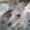 オーストラリア グレートバリアリーフ① ~陸観光~