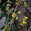 花開く−1