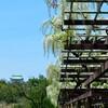 春の名城公園は「藤の回廊」が美しい!