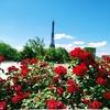 鰹のたたき / la vie parisienne