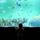 2歳児お出かけ*うちの男児の目が輝いた東京遊び場おすすめ15選