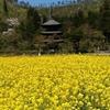 お花見ができないまま桜が散ってしまいました… 春を感じませんか?