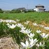 浜ちゃんブログ(7)     「神原町花の会(花美原会)」を綴るにあたって
