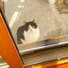外猫が愛猫に声かけをした。