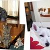 ねこさん多頭飼い それぞれの extailキャットケージ Part2