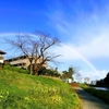 君は虹を見たかい