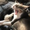 夕方、そろそろ活動開始 「1日の始まりはこれからさ」な猫はこちらです...