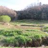 里山最高!はじめての横沢入で鳥撮り、戦車橋、林道歩き♪【前編】