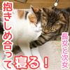 抱きしめ合って寝る猫姉妹!【長女ぽんずと次女ゆず】
