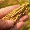 【ふるさと納税】佐賀県・みやき町の玄米が届きましたよ
