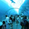 シンガポールのセントーサ島内を散策。マーライオンに水族館、ビーチやマレーシア料理など。
