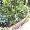 コーナー花壇の植え替え