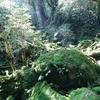 1泊2日の屋久島観光。アクセス方法やおすすめ観光地をご紹介