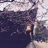 京都と多治見に旅行して、美しく暮らしたいからもう少し物を手放してみようと思った。
