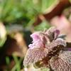 春の気配を感じている植物達
