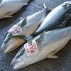 2020年4月3日 小浜漁港 お魚情報