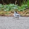 【野鳥】私の好きな野鳥はこちら!