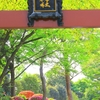 根津神社・つつじまつり