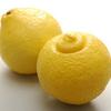 奇跡の柑橘「はるか」販売開始しました~