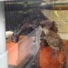 # 25 ミドリガメの偏食改善作戦‼️