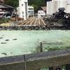 草津へ行きました。