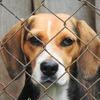 【動物殺処分・放棄・虐待ゼロを目指せ】命を簡単に解決するな!安易にペットを飼うな!