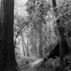 森、モノクロで 1