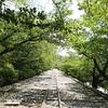 蹴上インクラインの新緑、京都の穴場スポット【動画あり】