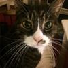 我が家のお猫様達をご紹介(*^▽^*)