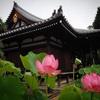 37.京都 法金剛院 蓮の花