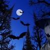 ハロウィンだけじゃない 吉祥紋様の蝙蝠(こうもり)