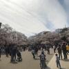 桜がとても綺麗だった東京国立博物館に行ってきた〔#199〕