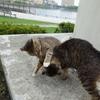 6月前半の #ねこ #cat #猫 その3