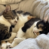 猫のぐりとはな。兄妹でなくても仲がいい不思議な縁。