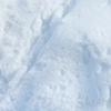 【雉始雊(きじはじめてなく)】雪の中のキジたち