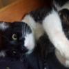 【速報】見たことないネコが俺のベッドの下で子供産んでたんだけど!/  A Cat Had Babies Under My Bed. Not My Cat!