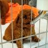 犬猫の流通、1年で10万匹増 途中で2万5千匹死ぬ