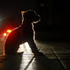 夜の犬の散歩に便利な「パナソニック LEDランタン」(BF-AL02K-W)