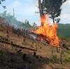 竹の焼畑2016ー夏焼火入れ