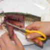 魚の解剖と観察